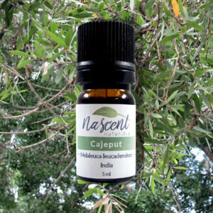 A 5ml bottle of Cajeput essential oil in front of a cajeput tree