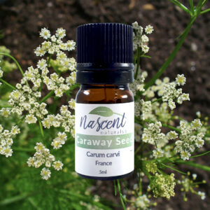 A 5ml bottle of Caraway Seed essential oil in front of caraway flowers