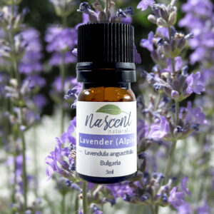 A 5ml bottle of Alpine Lavender Essential oil in front of Alpine Lavender plants