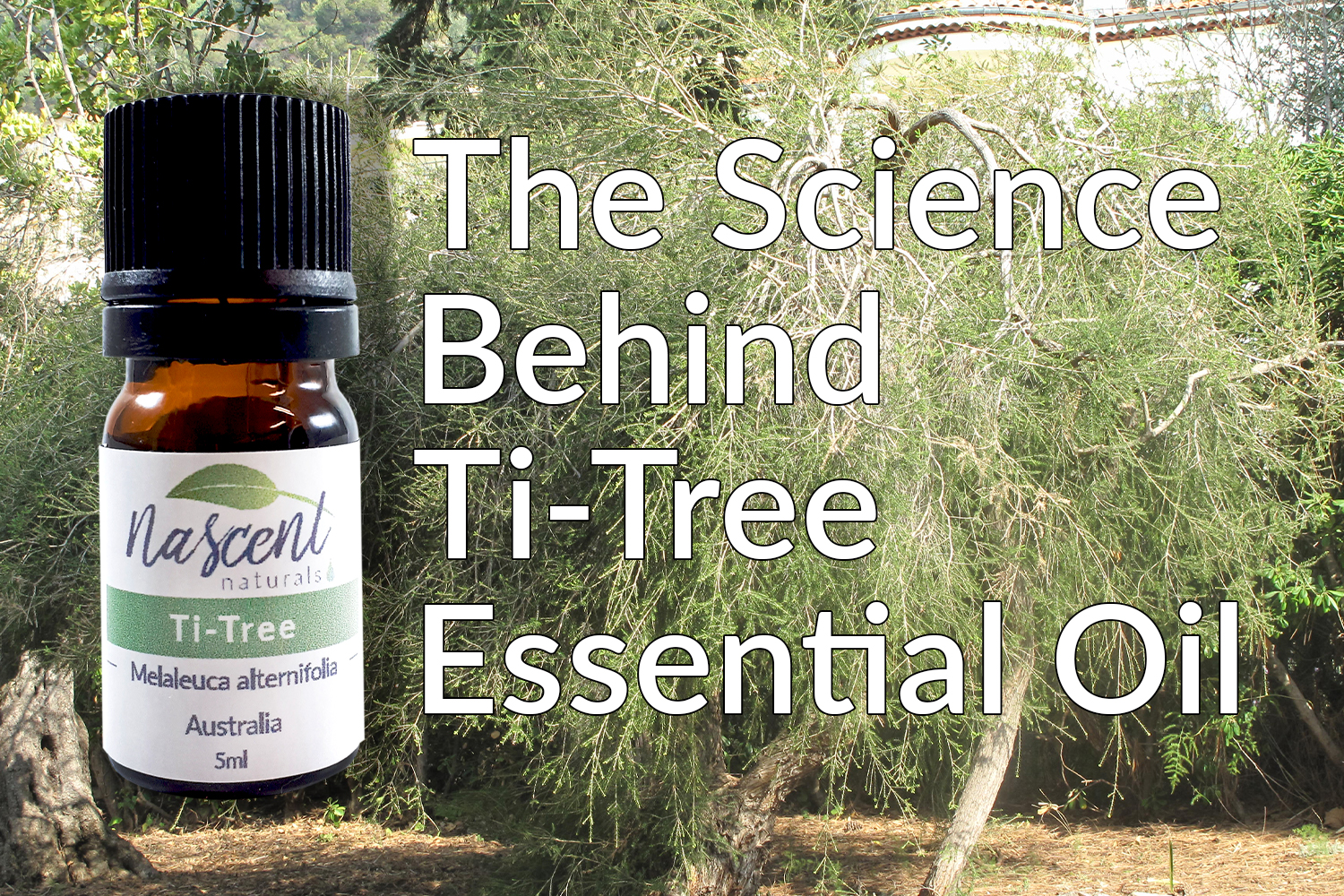A bottle of Nascent Naturals Ti-Tree essential oil in front of a Melaleuca alternifolia tree. There is white text on the image that says 'The Science Behind Ti-Tree Essential Oil'